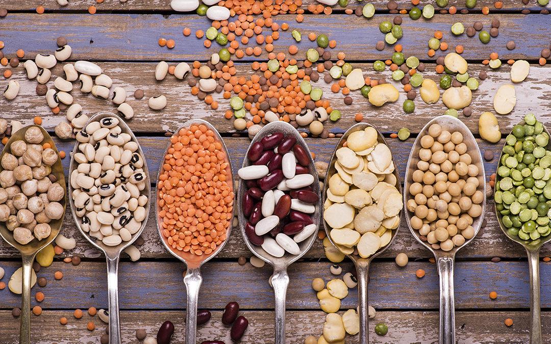 proteines animales vs vegetales