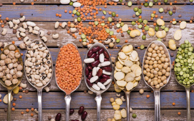 Protéines végétales vs animales ?